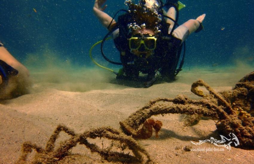 Relaxed Guided Dives, Niederländische Antillen, Curaçao