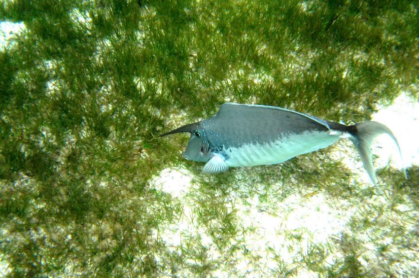 Kuredu - Lhaviyani Atoll
