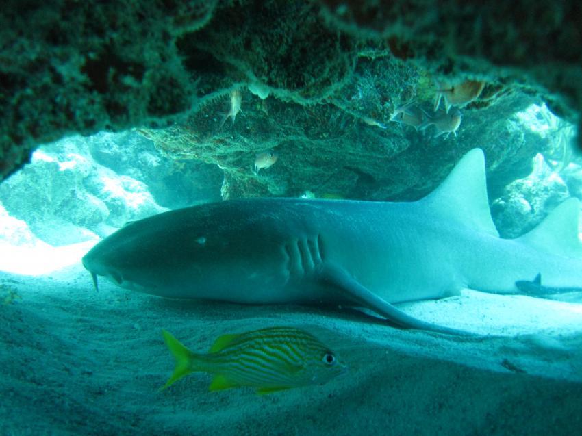 Hai liegt in Höhle