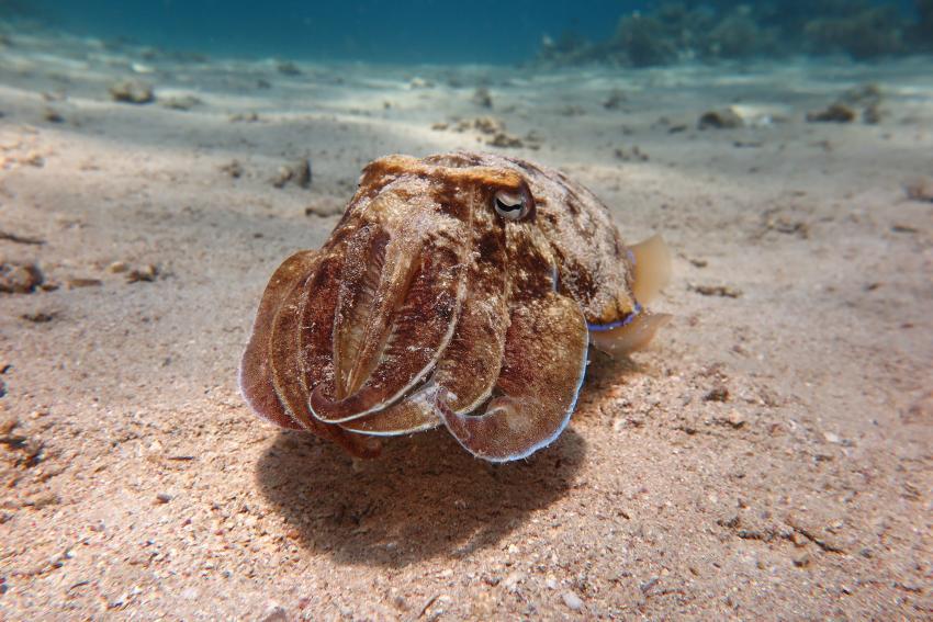 Scuba World Divers_Makadi Bay_Hausriff_8, Tauchen in der Makadi Bay, Scuba World Divers Makadi Bay, Ägypten, Hurghada