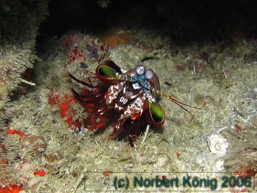 Tauchen mit Villa Diving, Maamigili Beru,Malediven