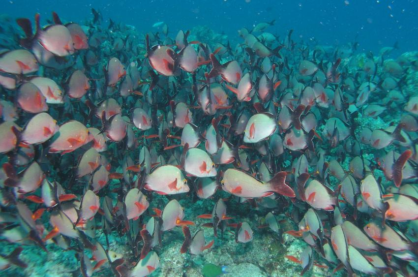 Lhaviyani Atoll Komandoo, Lhaviyani Atoll Komandoo,Malediven