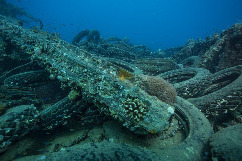 Turkia - Wracktauchgang, Wrack der SS Turkia (ex Livorno),Ägypten