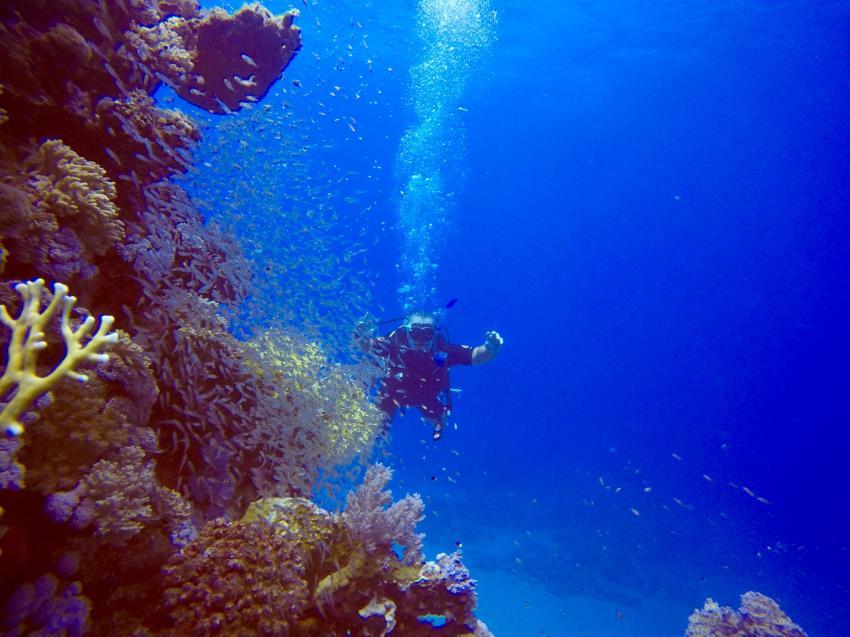 SuneoClub Reef Marsa_Port Ghalib_Hausriff_3, Ägypten Tauchen Marsa Alam Port Ghalib, Scuba World Divers, SuneoClub Reef Marsa, Port Ghalib, Ägypten, El Quseir bis Port Ghalib