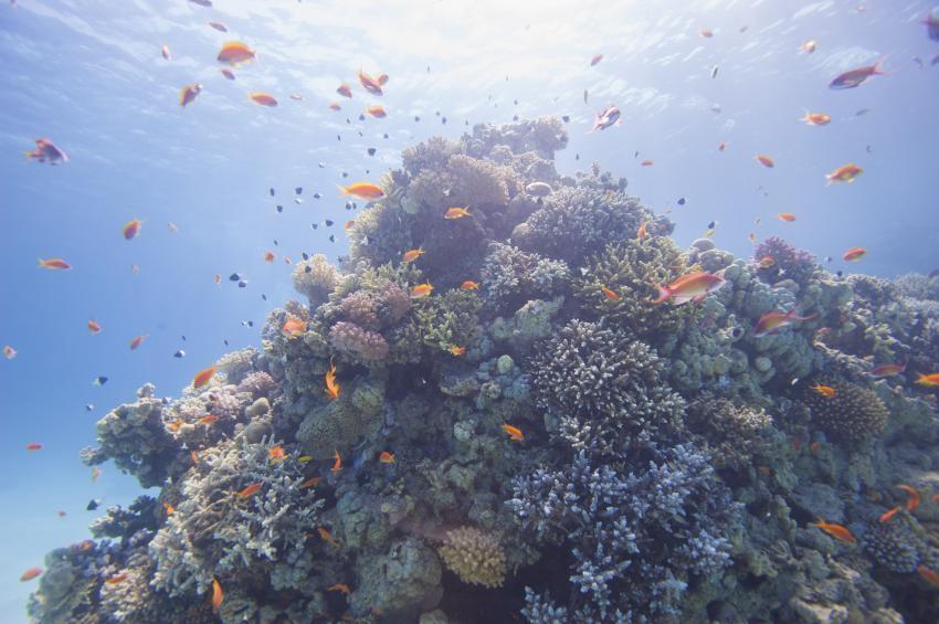 Scuba_World_Divers_Soma_Bay_7, Tauchen_in_Soma_Bay, Scuba World Divers Soma Bay, Caribbean World Resort, Ägypten, Safaga
