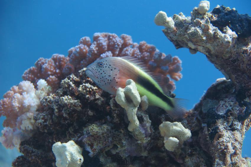 Scuba World Divers Soma Bay_4, Tauchen Ägypten Soma Bay Safaga, Scuba World Divers Soma Bay, Mövenpick Resort (ex Caribbean World Resort), Ägypten, Safaga
