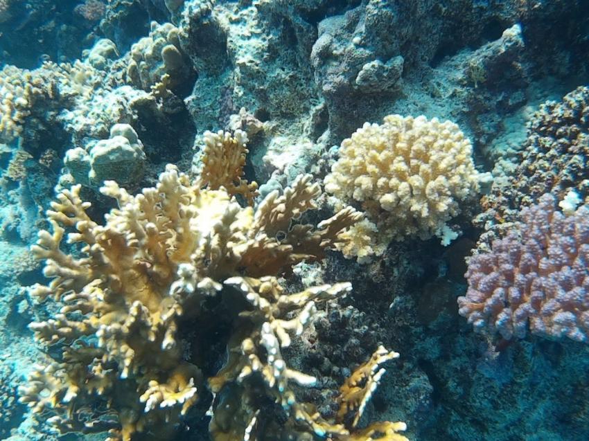 Korallen in bunt, soweit das Auge reicht..., Extra Divers Sharm El Naga, Extra Divers - Hotel Viva Blue, Sharm el Naga , Ägypten, Safaga