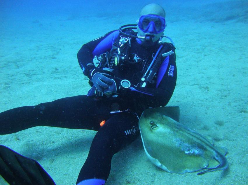 Stachelrochen kommt Kuscheln, Radazul, Teneriffa, Kanarische Insels, Scubanana Dive Center, Teneriffa, Spanien, Kanaren (Kanarische Inseln)