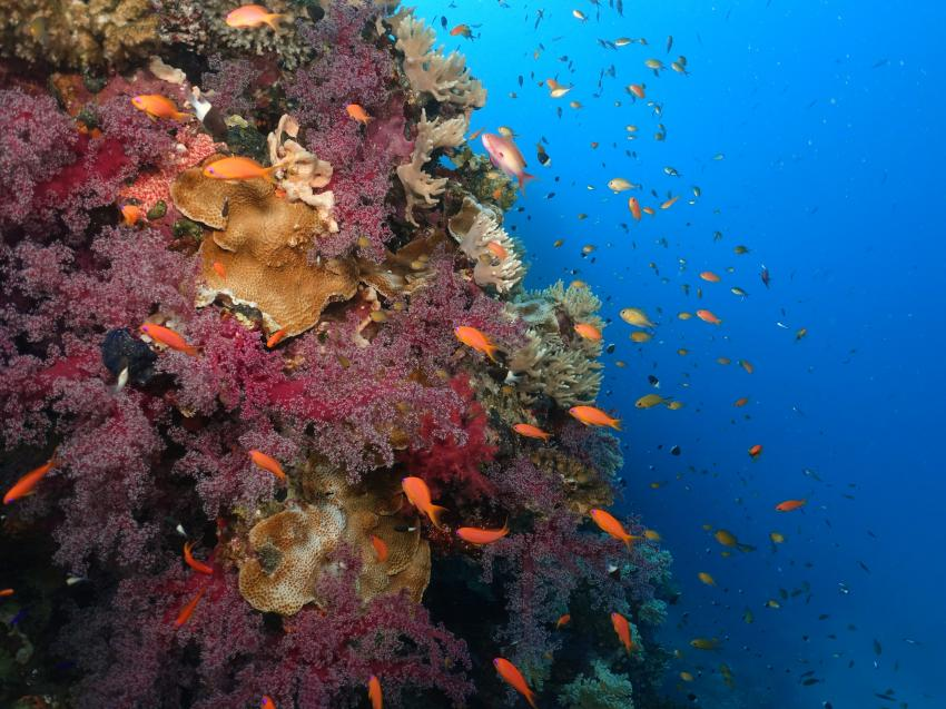 Hausriff Lahami Bay, Korallen, Lahami Bay, Hausriff, Barakuda Diving, Ägypten