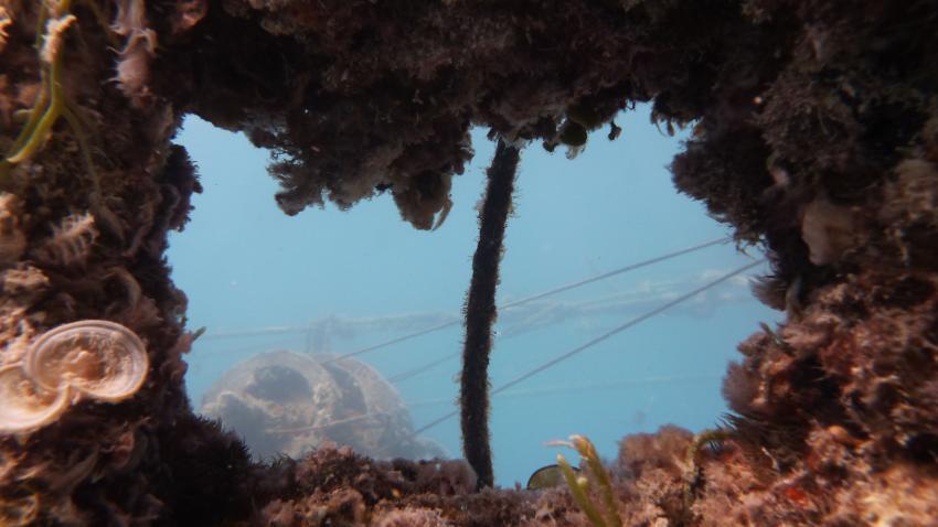 Balena, Wrack der MS Balena,Ägypten
