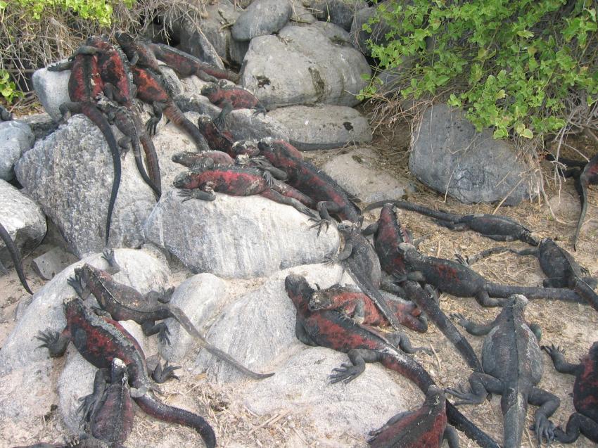 Galapagos, Galapagos Allgemein,Galapagos,Ecuador,echsen,drachen,saurier