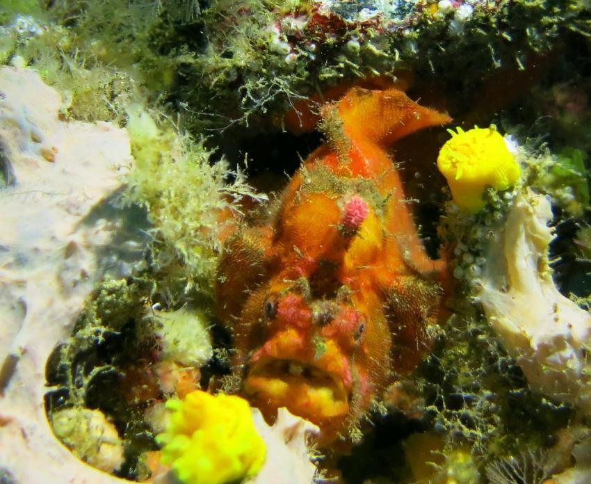 Aquanautic Club Lanzarote (ex Speedy`s Diving Center), Spanien, Kanarische Inseln