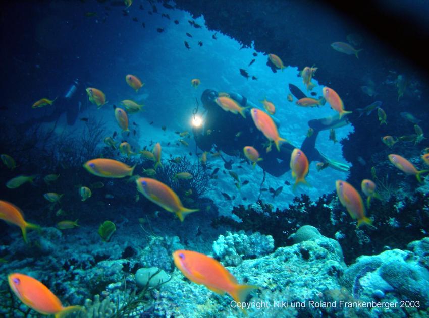 Sarah-Tauchsafari, Malediven allgemein,Malediven