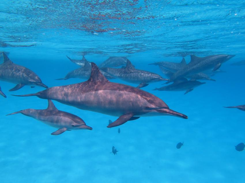 Scuba World Divers Soma Bay_5, Tauchen Ägypten Soma Bay, Scuba World Divers Soma Bay, Caribbean World Resort, Ägypten, Safaga