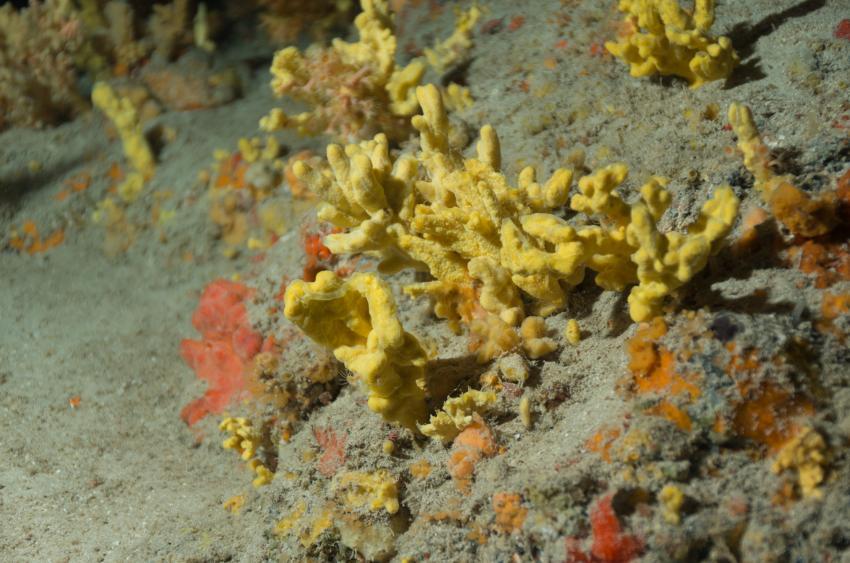 Korallen in der Kathedrale