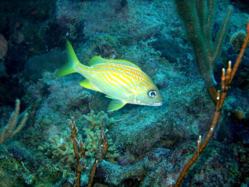 Puerto Plata Dressel Divers, Puerto Plata,Dominikanische Republik