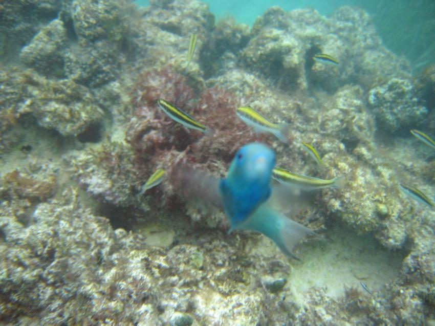 Punta Cana, Punta Cana,Dominikanische Republik