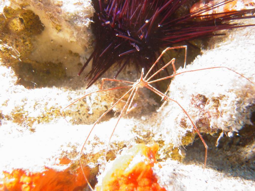 Fuerteventura Jandia Großes Muränenriff, Fuerteventura Jandia Großes Muränenriff,Spanien