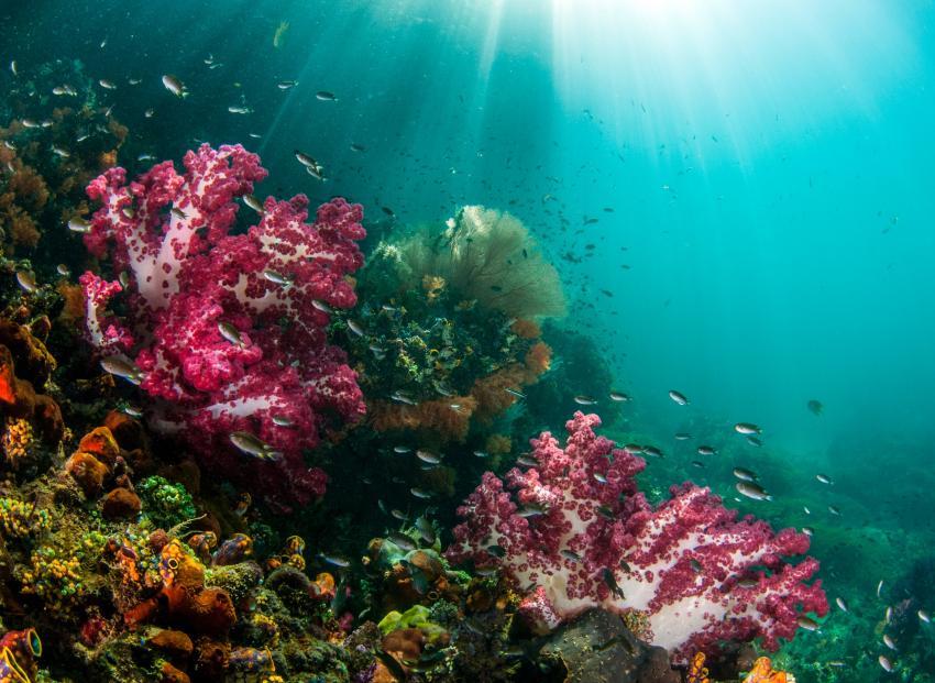 Papua Explorers Unterwasser, Tauchen Raja Ampat, Raja Ampat Papua Explorers Resort, Indonesien, Allgemein