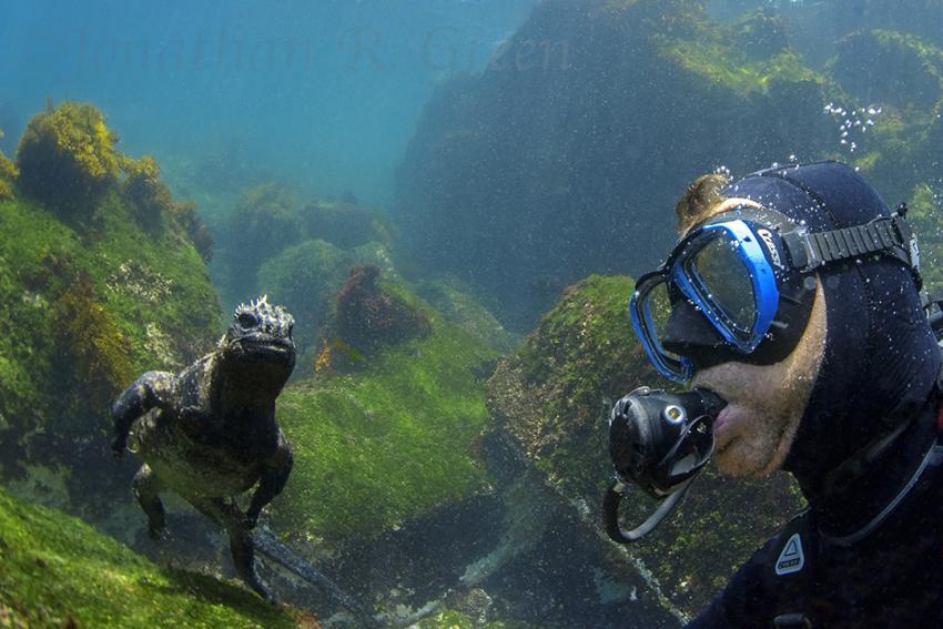 Meeresechse und Taucher, Meeresechse, Meerleguan, Leguan, Cape Douglas, Ecuador, Galapagos