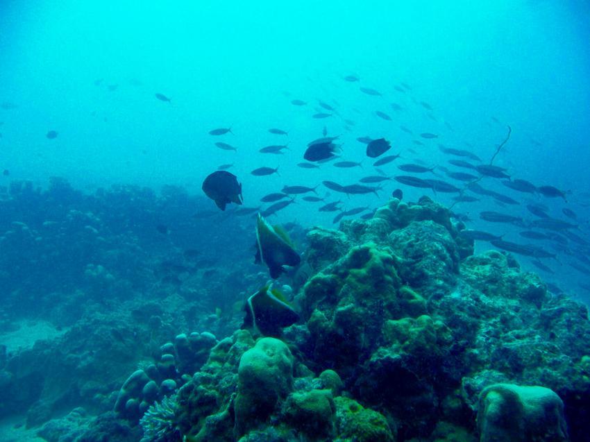 Whitetip Marine Adventures, Denarau, Fidschi
