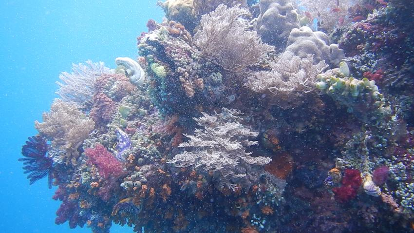 Explosion an Farben, Papua Paradise Eco Resort, Indonesien, Allgemein