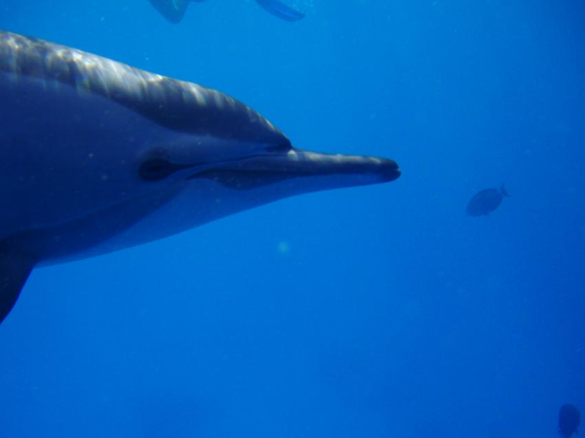 Akassia diving