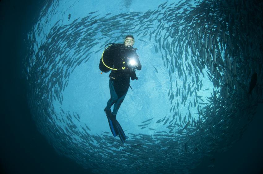 Tauchen mit Makrelen Schwarm