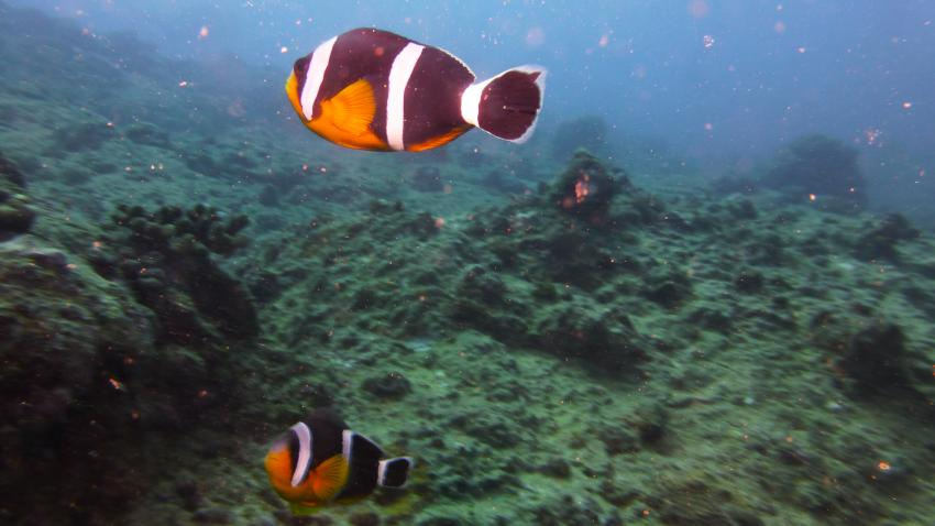 Fotogen, Sun Divers Ltd., Flic en Flac, Mauritius
