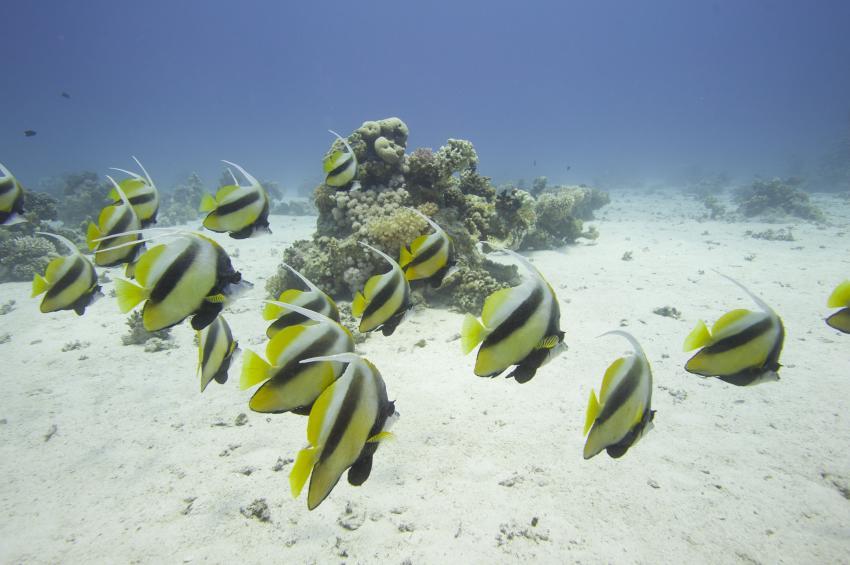 Scuba_World_Divers_Soma_Bay_2, Tauchen_in_Soma_Bay, Scuba World Divers Soma Bay, Caribbean World Resort, Ägypten, Safaga
