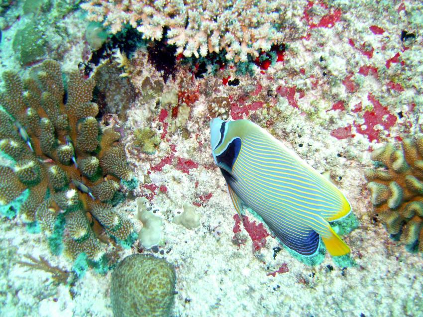 Mahé - Conception Island drift dive, Mahe,Beau Vallon,Conception Rocks,Seychellen