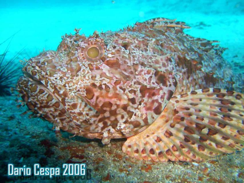 Fuerteventura-Deep Blue Dive Centre, Fuerteventura,Spanien