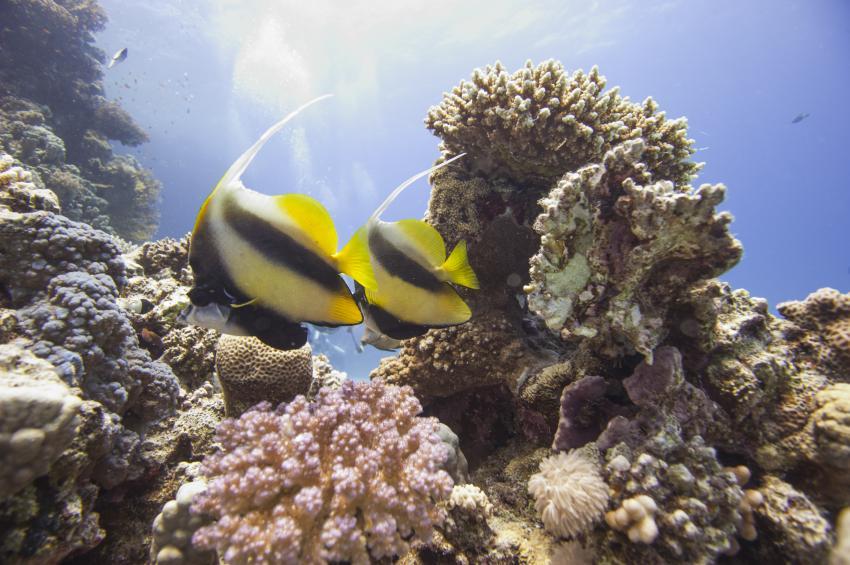 Scuba_World_Divers_Soma_Bay_8, Tauchen_in_Soma_Bay, Scuba World Divers Soma Bay, Caribbean World Resort, Ägypten, Safaga