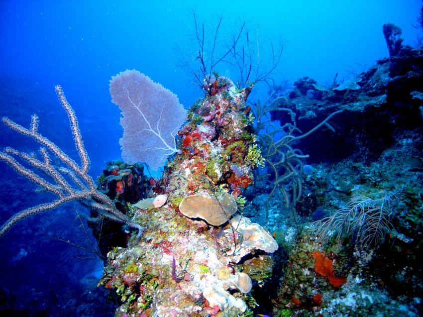 Cayo Largo, Cayo Largo,Kuba,Korallen,weich und hart