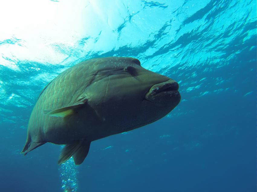 Diving Hurghada, diving hurghada, divinghurghada, hurghadadiving, hurghada diving, Diving Hurghada - Diving Course Hurghada, Ägypten, Hurghada
