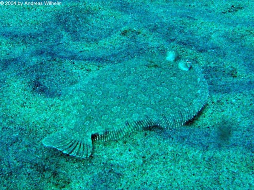 Fuerteventura Jandia - Kleines Muränenriff, Fuerteventura Jandia - Kleines Muränenriff,Spanien