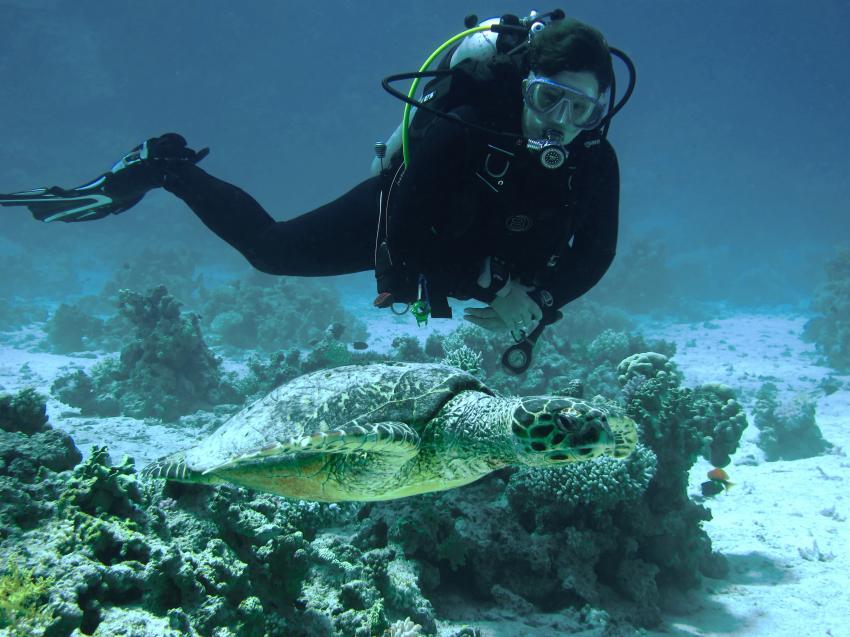 Eagle Ray Divers, Sun & Sea Hotel Hurghada