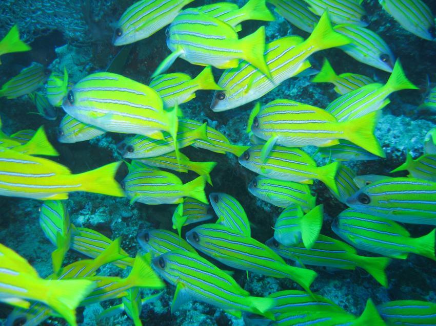 Kuramathi, Kurumathi - Rasdhoo Atoll (Ross Atoll),Malediven