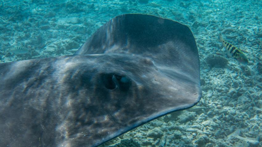 Bora Bora 05.2013, TOP-Dive Center Bora Bora,Französisch-Polynesien
