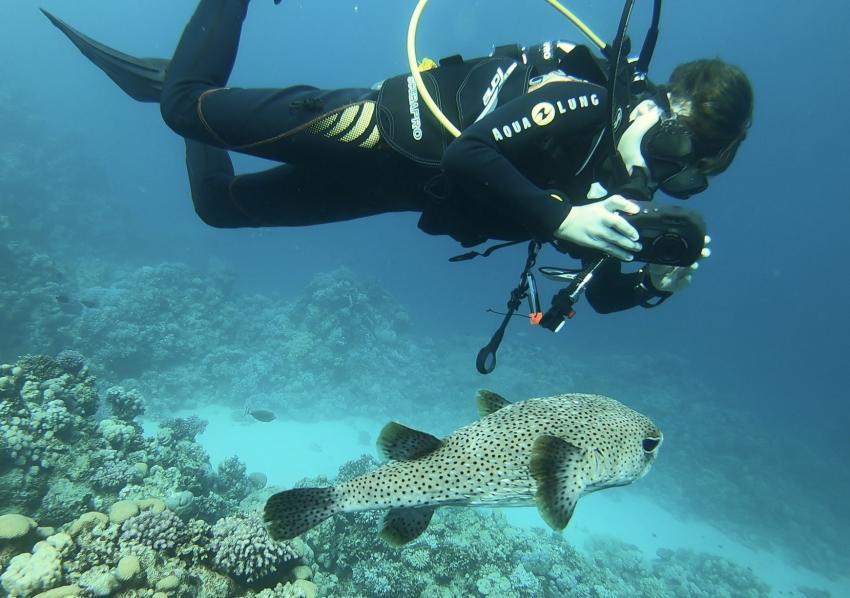 Shark Paradise, Marsa Alam, Ägypten, Marsa Alam und südlich
