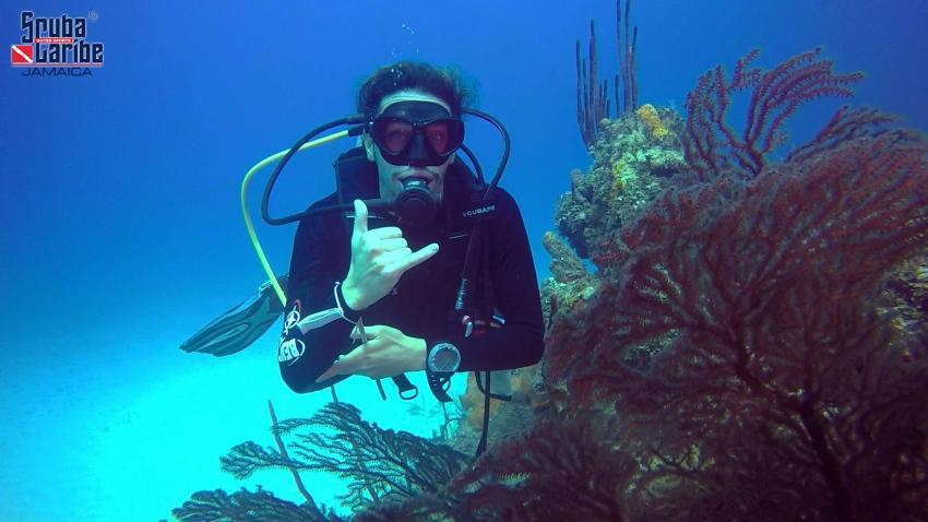 Negril unterwasser, Scubacaribe RIU Tropical, Negril, Jamaika