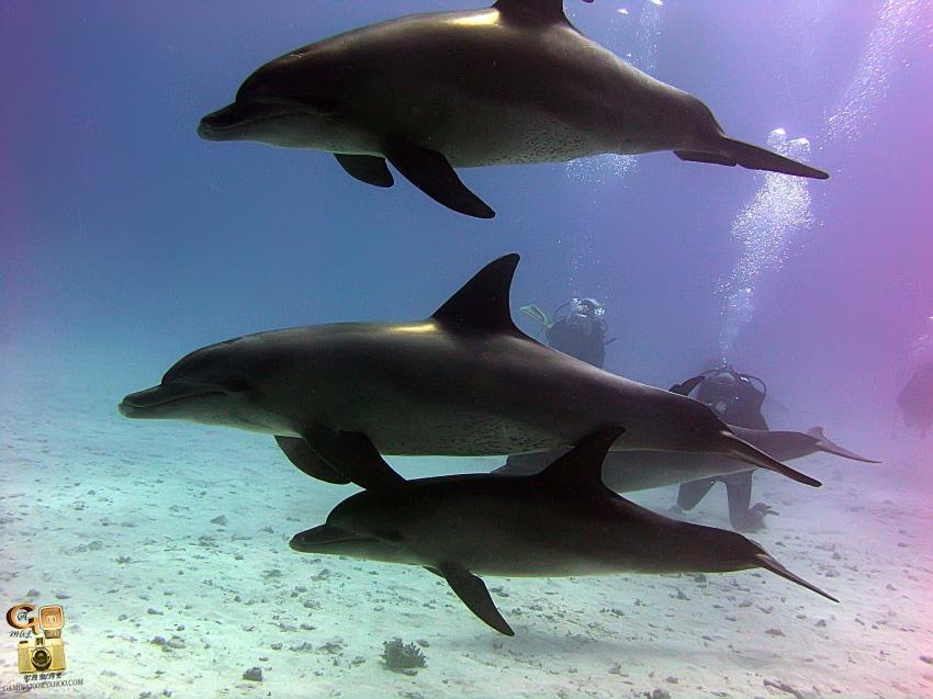 Scuba World Divers Soma Bay_9, Tauchen Ägypten Soma Bay, Scuba World Divers Soma Bay, Caribbean World Resort, Ägypten, Safaga