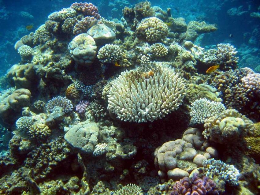 Shark Bay, Shark Bay - Sharm el Sheikh,Ägypten,riff,korallen