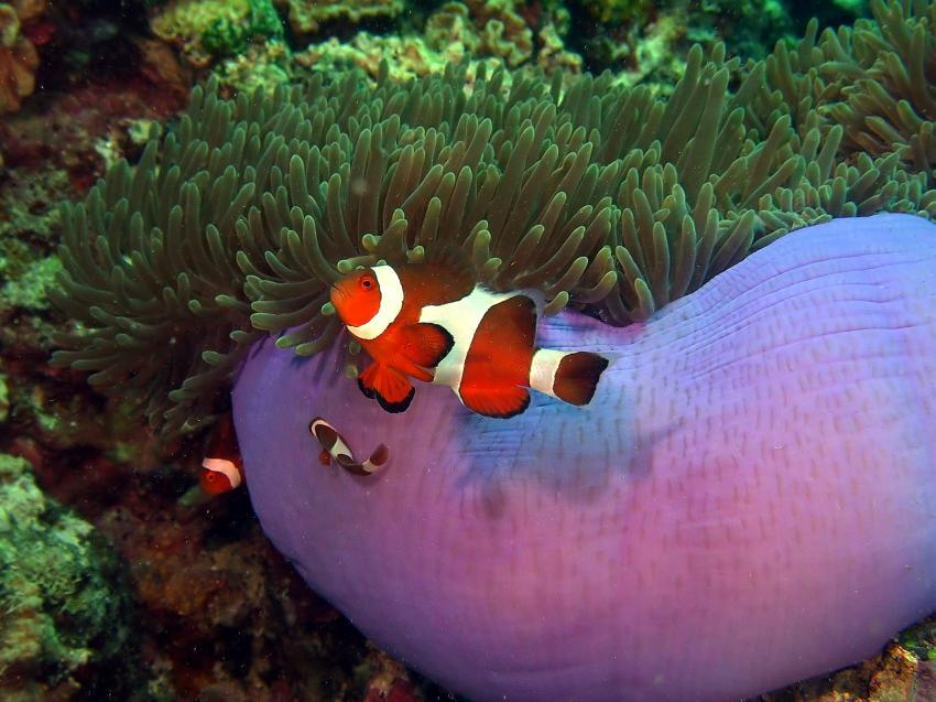 Siqujior, Aberration Dive Club