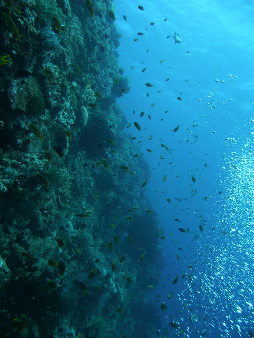 Coco White Beach, Coco White Beach,Philippinen,Steilwand. drop-off