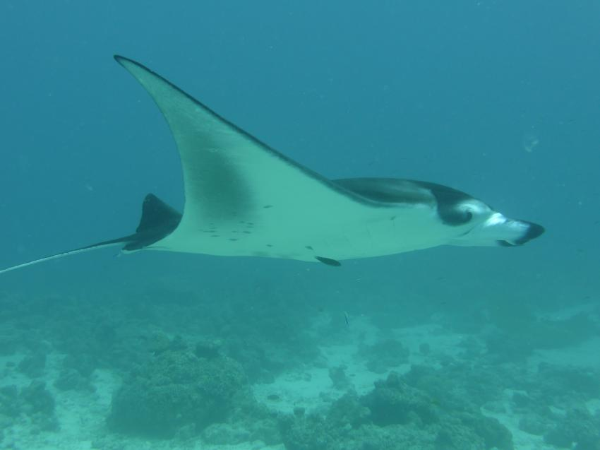 Manta Point, Dive Shack, Rasdhoo, Nord Ari Atoll, Malediven