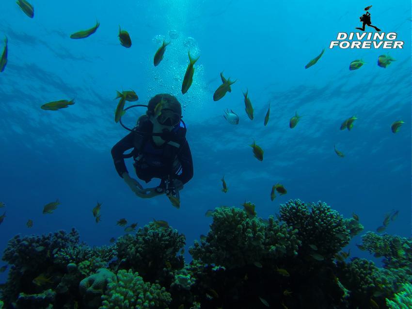 tauchen hurghada www.divingforever.com, tauchen hurghada www.divingforever.com, Diving Forever Hurghada, Ägypten, Hurghada