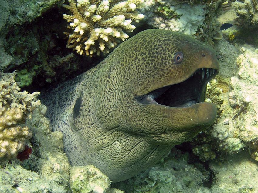 Scuba World Divers Soma Bay_7, Tauchen Ägypten Soma Bay, Scuba World Divers Soma Bay, Caribbean World Resort, Ägypten, Safaga
