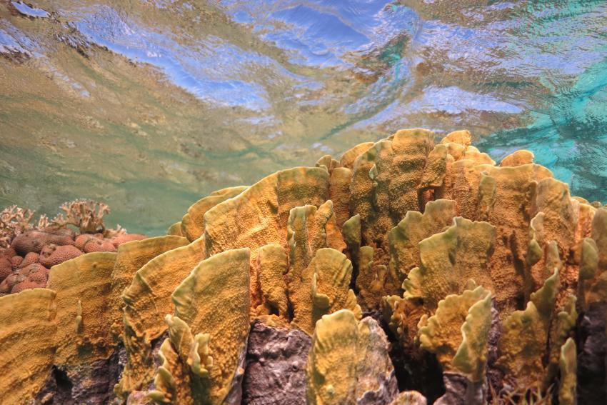Corals, Abu Dabbab, Marsa Alam, Diving, Blue Ocean Diving Center, Abu Dabbab, Ägypten, Marsa Alam und südlich