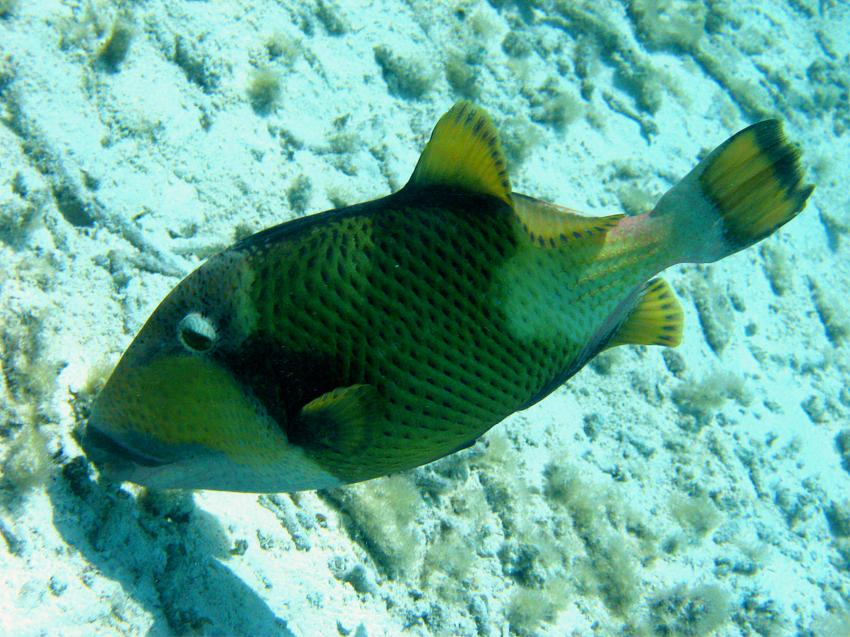 bolifushi house reef, blue canyon, Bolifushi,Malediven,bolifushi house reef,blue canyon